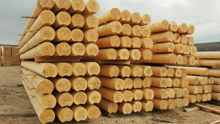 Drvo Kedar